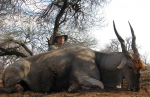 Eland hunting in Limpopo, South Africa